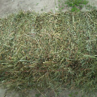Beautiful Timothy/Alfalfa Blend - Hay