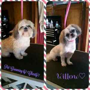 Professional one on one dog grooming!  Peterborough Peterborough Area image 6