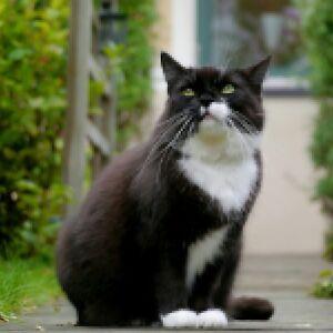 Persian | Adopt Local Cats & Kittens in Mississauga / Peel Region ...