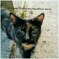 Recognize this cat?  Posting on behalf of WMFCW