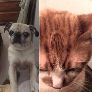 looking for  pet friendly residence Guelph, apt or house