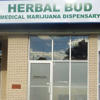 Looking for friendly secretary and budtender