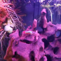 Home bred fish and snails