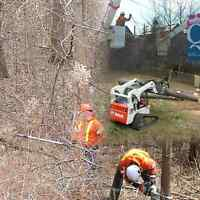 Free consultation for Tree Care and Tree Removal 6475458733