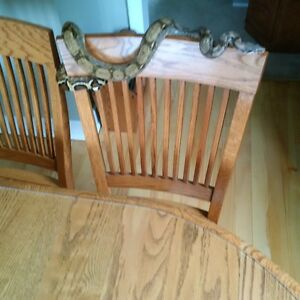FS: 4 1/2 foot Hog Island Boa and Enclosure