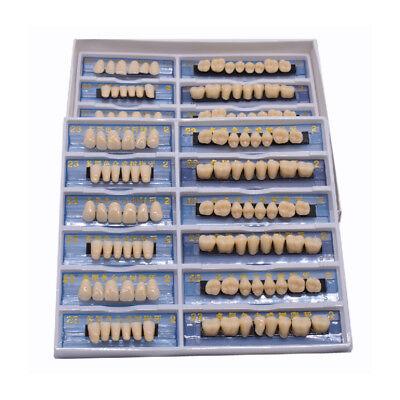 168ps Acrylic Resin Denture Dental Teeth Model Upper Lower Shade 23 A2 Oral Care