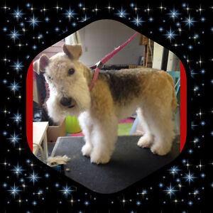 $50 Cat & Dog Grooming / CERTIFIED MASTER GROOMER 30 Yrs Exp $50