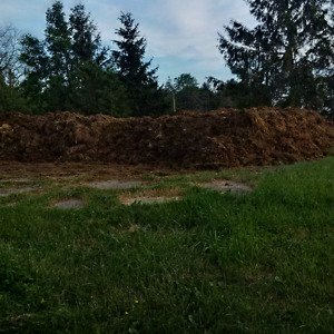 Fresh cattle manure free for the taking