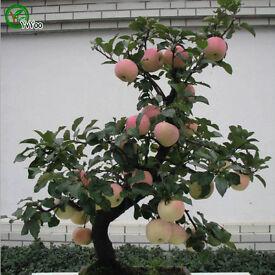 organic fruit trees (various)