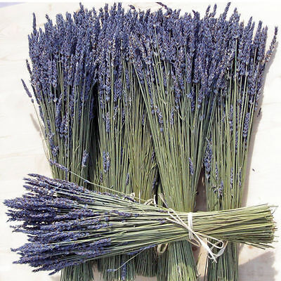100 Stems Natural Dried French Fragrant Lavender Bunch Tied New Home Decoration - Lilac Decorations