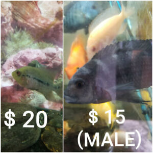 FISH SALE!! ( see prices in the picture )