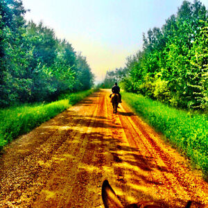 Horse Board East of Edmonton