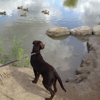 Barrhaven Nature Lovers Dog Boarding,   25 Years Expert