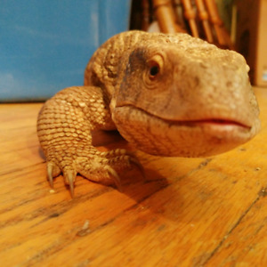Rehoming your Reptiles?