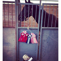 16.2hh Black Warmblood Gelding For Part-Board