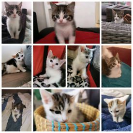Kittens In Norwood London Cats Kittens For Sale Gumtree