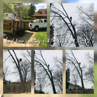 Best tree cutting services