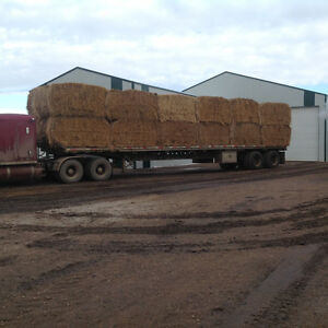 LARGE SQUARE & ROUND BALES for sale