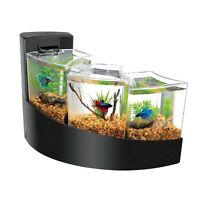 Beta Fish tank with Fish and accessories