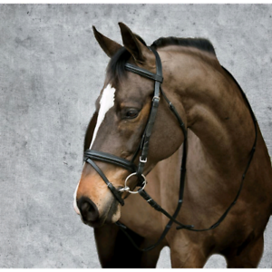 Looking for Dressage Bridle