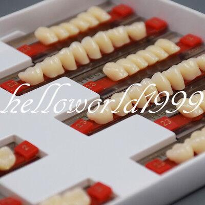 Dental Oral Acrylic Resin Denture Teeth Vita A2 - 23 Upper Lower 3 Set Of 841