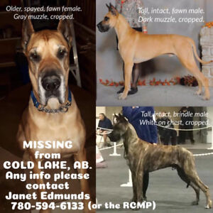 ** STOLEN ** THREE GREAT DANES