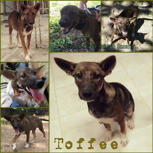 For Adoption: TOFFEE