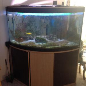Salt water aquarium with fish