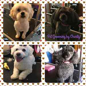 One on one professional dog grooming! Peterborough Peterborough Area image 2