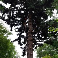Tree Removal- ISA Certified Arborists- Enjoy Winter Rates