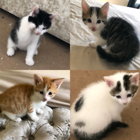Gorgeous kittens available now