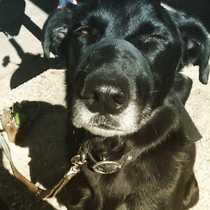 Pet companion Kitchener / Waterloo Kitchener Area image 2