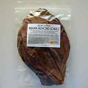 Large Indian Almond Leaves (10 Pack)