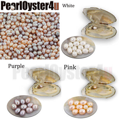 5PCS Freshwater Oyster with One Rice Pearl, Grade AAA, Good Luster, Best Gift