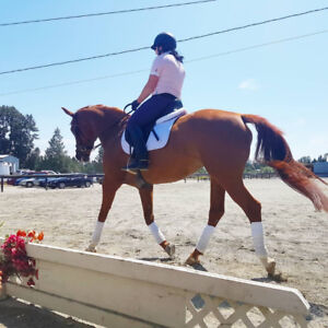 Dressage Mare for Lease