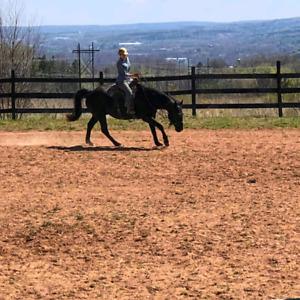 Natural Horsemanship Western Riding Lessons