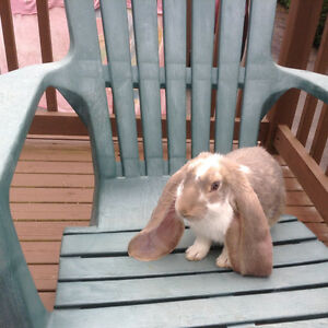 Square bale quality hay for pet rabbit