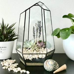 Plant Terrarium Buy Or Sell Indoor Home Items In Toronto Gta