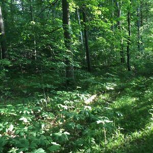 ESTATE lot Oak Hills Belleville Belleville Area image 5