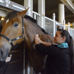 Stable Hands Equine Massage Therapy Cambridge Kitchener Area image 7