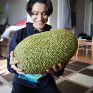 Whole Jackfruit 50$ pick up only