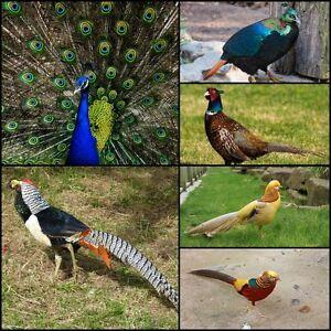 EXOTIC BIRD & LIVESTOCK SALE