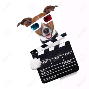 Small dog needed for a film shoot!