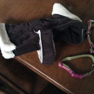 Brand new dog collar, halter and coat