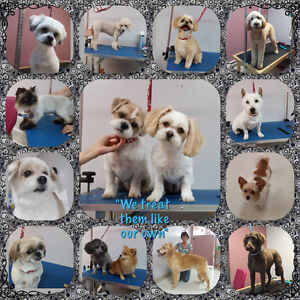 Animal Attraction - Pet Grooming
