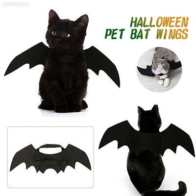 gel Katze Kostüm Schwarz  Halloween Suppiles Tier Für (Fledermaus Kostüm Für Hunde)