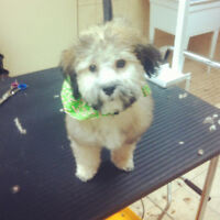 CERTIFIED dog and cat groomer. Lasalle