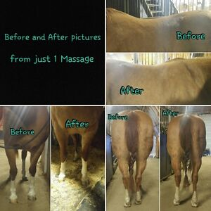 Equine Massage Spring Tune Up & Maintenance Special!