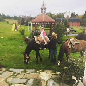 Need Boarding for two horses from November - end of April