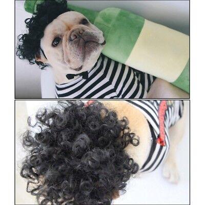 Pet Hair Wig Dog Cat Funny Curl+Braid Costume Puppy Birthday Party Fancy Hot - Hot Dog Cat Kostüm